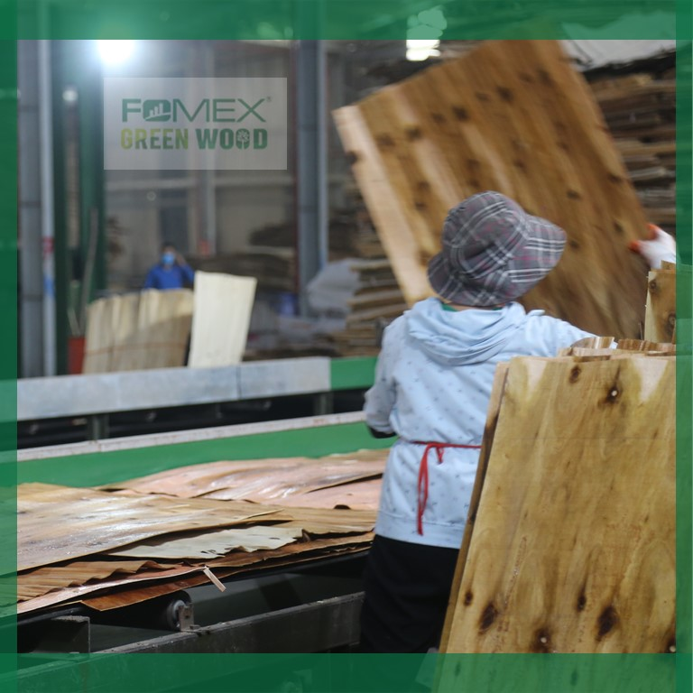 VIETNAM FILM FACED PLYWOOD MANUFACTURING PROCESS